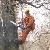 Удаление деревьев фрагментами