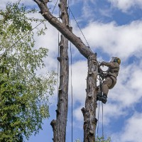 Удаление дерева по частям на кладбище
